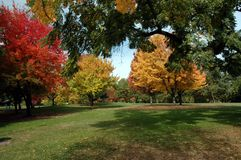 Autumn Colors. A variety of trees showing many fall colors stock photo