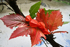 Autumn colors. Red and green leaves and plants on a pale blue background Royalty Free Stock Photo