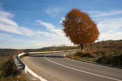 Autumn colors. Secluded tree on the side of the road Royalty Free Stock Images
