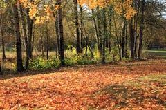 Autumn Colors. Stock Photos