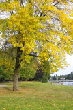 Autumn Colors 2. Changing of a season colorful bright cooler and picturesque Royalty Free Stock Photos
