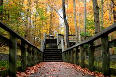 Autumn Colors Royalty Free Stock Photo
