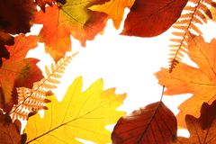 Autumn colors Royalty Free Stock Image