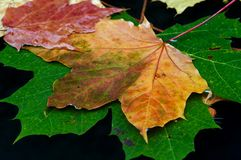 Autumn colors. Detail of autumn leaves on the surface of water stock image