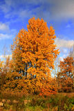 Autumn colors Stock Image