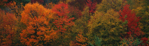 The autumn colors Royalty Free Stock Images