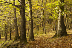 Autumn colors. Scenery and autumn colors in the woods, Italy stock photography