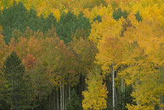 Autumn Colors 272-3-3. Mountain colors, Autumn, Uinta Mountains Royalty Free Stock Photo