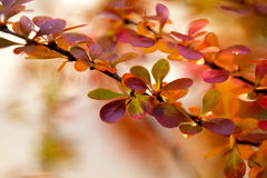 Autumn Colors Royalty Free Stock Photography