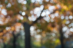 Autumn colors. Whit twinkle Stock Image