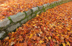 Autumn colors. Multicoloured fallen leaves on the ground in the park in autumn Stock Images