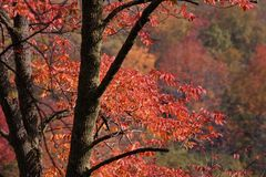 Autumn Colors. Beautiful display of autumn colors stock photo