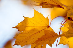 Autumn colors. Autumn foliage - beautiful fall colors Stock Photo