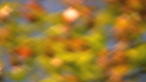 Autumn colors Stock Images