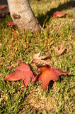 Autumn Colors Foto de archivo