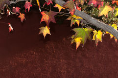 Autumn Colors Fotos de archivo libres de regalías
