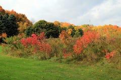 Autumn Colors Immagini Stock