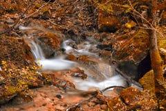 Autumn Colors Lizenzfreies Stockfoto