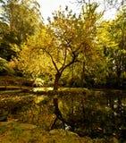 Autumn Colors Imagen de archivo