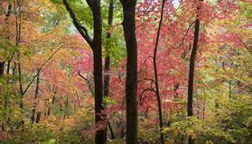 autumn colors Στοκ φωτογραφίες με δικαίωμα ελεύθερης χρήσης