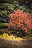 Autumn Colors Photo stock