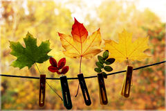 Autumn Colors Stockbild