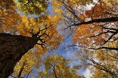 Autumn Colors Immagine Stock Libera da Diritti