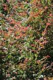 Autumn Colors Photographie stock