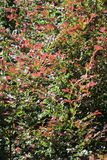 Autumn Colors stock fotografie