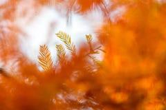 Autumn Colors Fotos de Stock