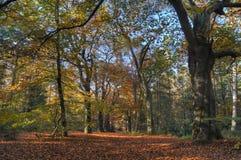 Autumn Colors Fotografia de Stock