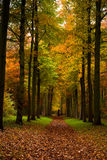 Autumn colors. In the forest Stock Photo