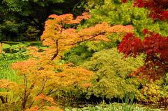 Autumn Colors Stock Photography