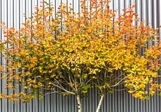 Autumn Colors images libres de droits