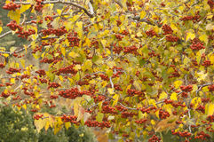 Autumn Colors Imagem de Stock Royalty Free
