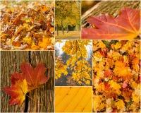 Autumn Colors Photo libre de droits