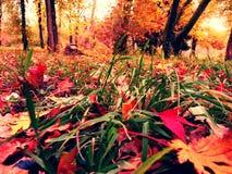 Autumn Colors Lizenzfreie Stockfotografie
