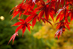 Autumn Colors Stock Afbeelding