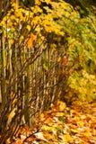 Autumn Colors Photos libres de droits