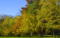 Autumn colors. Nature in yellow autumn colors stock image