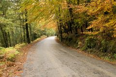 Autumn colors. Mountain road with autumn colors on nature royalty free stock image