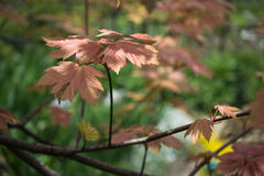 9 autumn colors Στοκ Φωτογραφίες