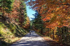 Autumn Colors Image stock
