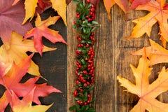 Autumn Colors Stockbilder