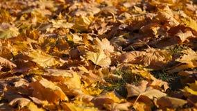 Autumn Colors images stock