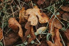 Autumn Colors Stockfotos