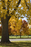 Autumn Colors. Trees turning colors in City Park in Denver, Colorado Stock Photo