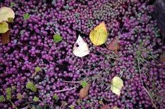 Autumn Colors Fotos de archivo libres de regalías
