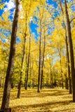 Autumn Colors Imagem de Stock