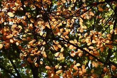 Autumn Colors Fotos de archivo